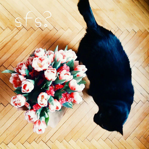 chto-takoe-sfs-v-instagram | naoblakax.ru